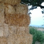 Hay for House building