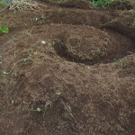 Shaping the soil