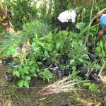 Sorting plants