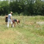 Herb picking