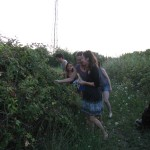 Bearberry  picking