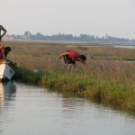 Herb picking in the Venice Lagoon