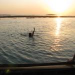 Bath in the Venice Lagoon