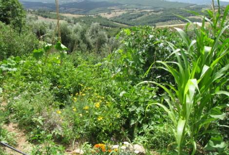 Synergic gardening